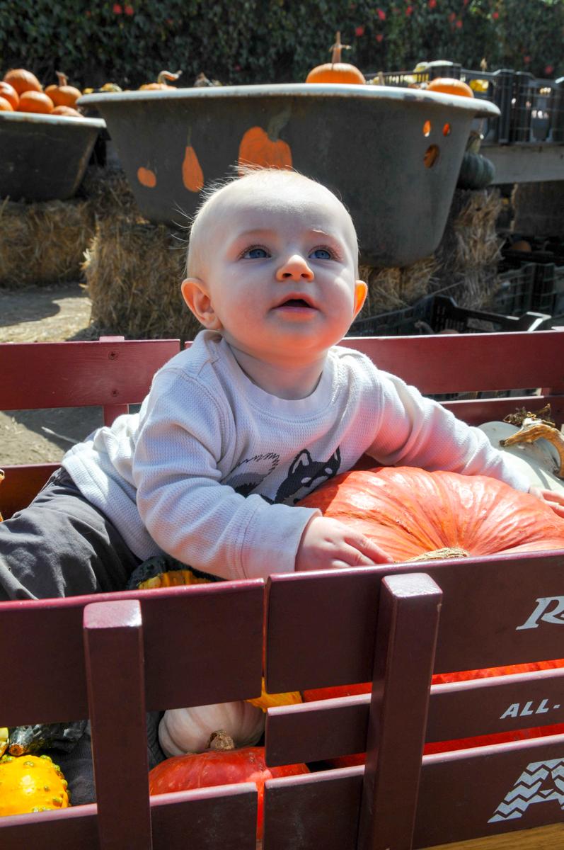 A wagon full of pumpkins