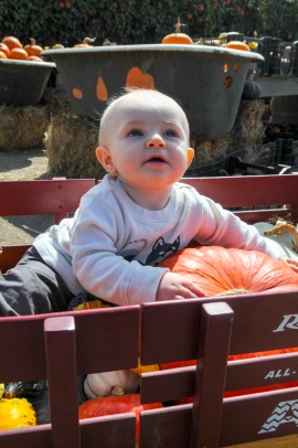 A wagon full of pumpkins