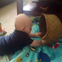 Just like Kitty, wants to play with the basket rather than the toys. (Though he has since moved onto the toys.)