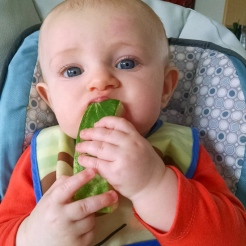 Watermelon has moved up I the world. At least for teething purposes.