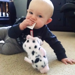 He often prefers tags to the toy itself. That's a spotted stuffed pig by the way.