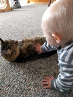 Petting Kitty